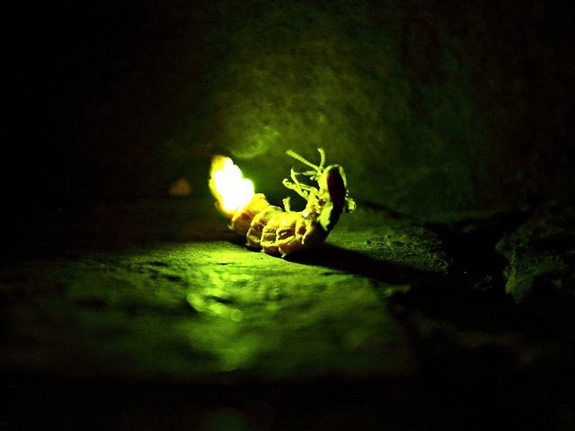 planta luminosa luz ciudades