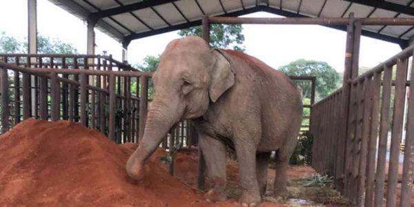mara elefanta